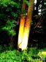 2017-07-29 Beleuchtungsabend im Botanischen Garten