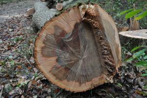 Bild: Forstverwaltung Augsburg