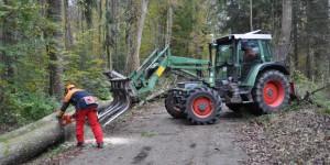 Seit vergangenem Montag arbeitet das Personal der Forstverwaltung an den pilzbefallenen Eschen im Lechauwald. Foto: Forstverwaltung Augsburg