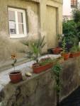 Foto: Kulturkreises Haunstetten - Romantische Idylle mitten in der Altstadt