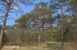 Haunstetter Wald
