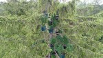 Marihuana-Plantage im Haunstetter-Wald